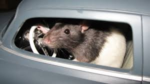 Rats in Cars and Other Problems When Your Car Sits Idle